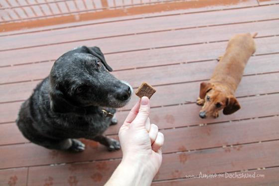 Drool Worthy TRU Harvest Dog Treats from Walmart #sponsored