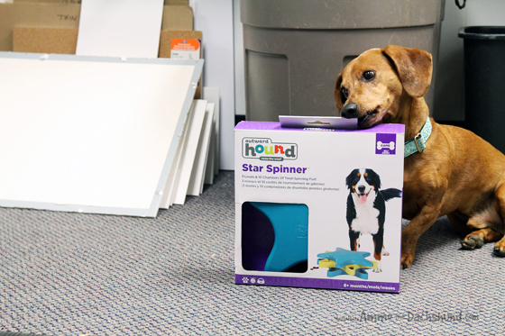 A Smart Toy for Bored Shop Dogs from Chewy.com #ad