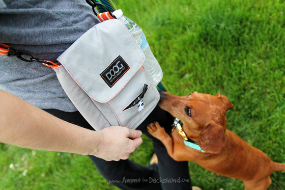 The Dog Walking Bag You Must Have + A Giveaway // DOOG USA