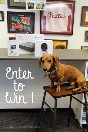 Security Cameras to Keep Family and Pets Safe + A Giveaway #ad