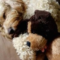 Sunday Tittle Tattle: Hotel Awards and Sleeping Pets