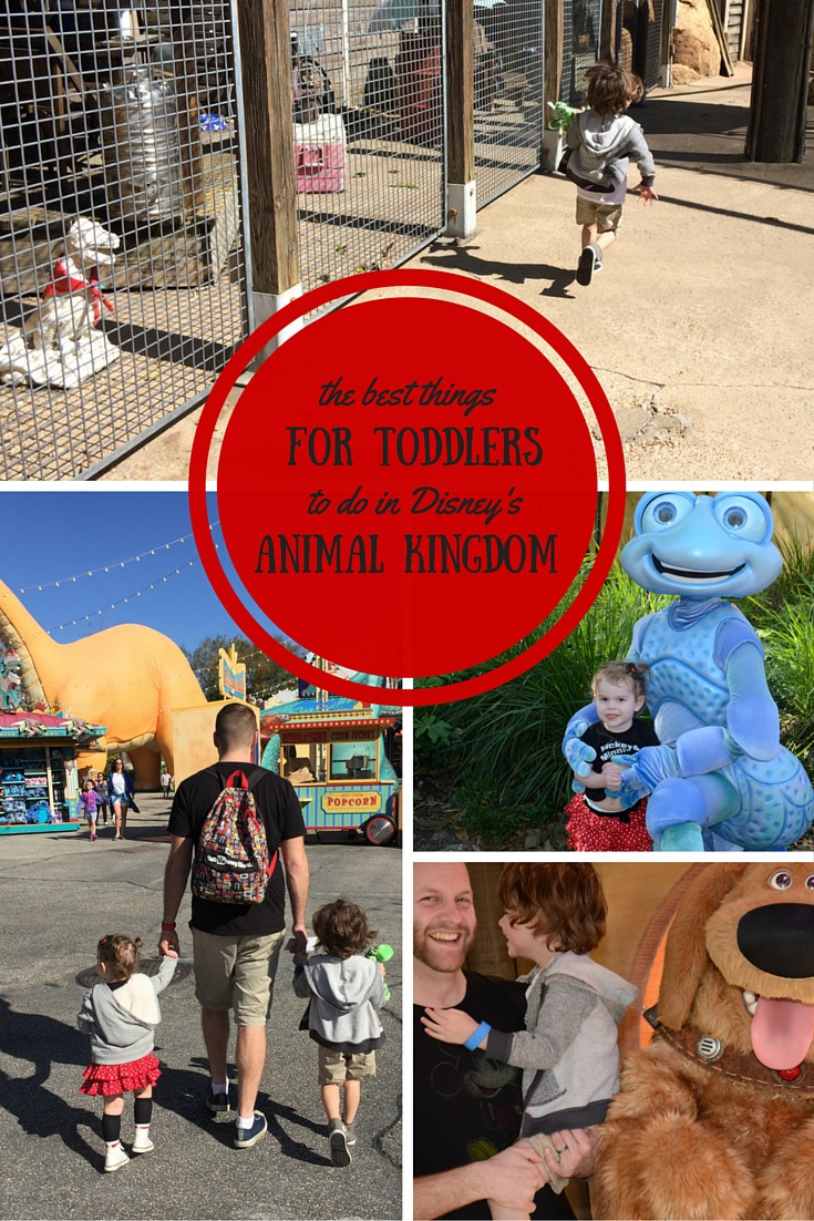 the best things to do with toddlers in animal kingdom // a monkey and his mama