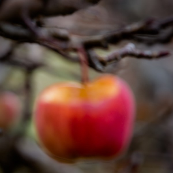 Abstract image of an apple with the top nibbled off.