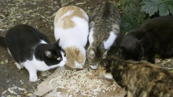 La casa de los gatos: Un refugio para animales y niños en Alepo