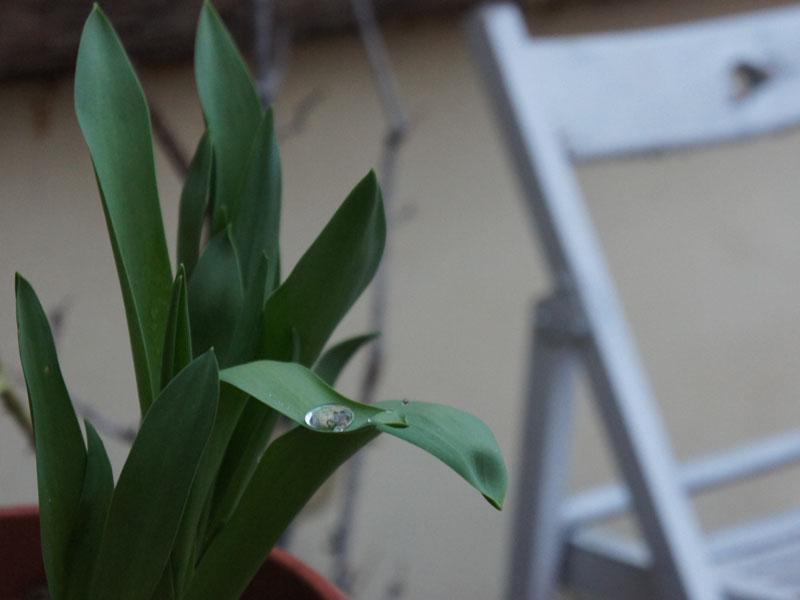 Piove-la-primavera