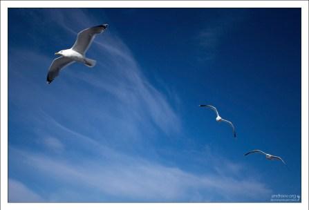 Чайки над Белым морем.