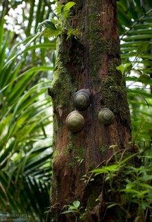Гигантские лесные улитки размером с ладонь.