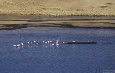 Группа фламинго спит посередине водоема Laguna de Salinas.