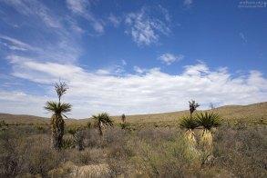 Юкковая долина в этом году практически не цвела, в отличие от прошлого года.