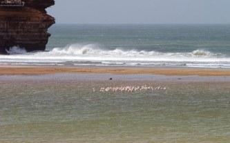 Фламинго спят на мелководье.