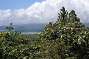 Озеро Аренал сквозь кроны цикропий.