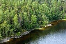 Березовый лес на берегу Малой Никоновской бухты.