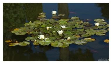 Красивый пруд в садах Generalife.