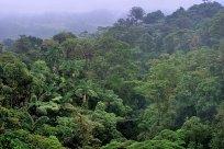Верхний слой джунглей с высоты одного из подвесных мостов.