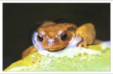 Лягушка-фотомодель в одном из водоемов в парке Пена.