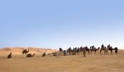 Верблюжий караван с туристами.