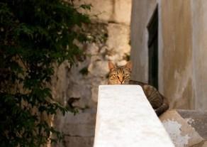 Один из сотен котов, живущих под Акрополем.