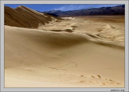 Следы дюны. И не только человеческие...