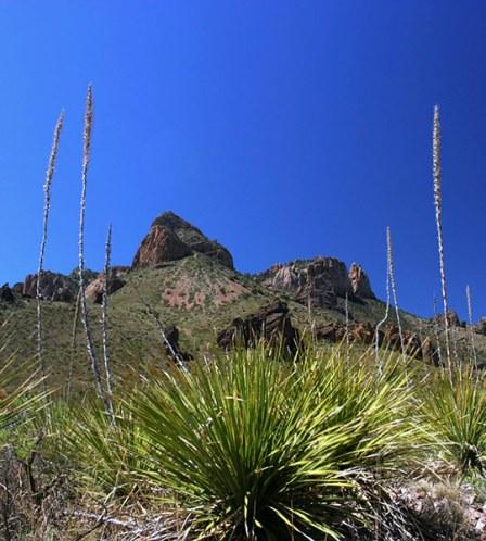 Скала Lost mine peak (2301 м) в окружении кустов сотола.
