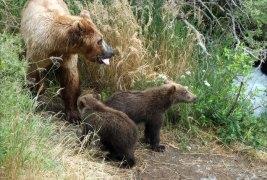 Мама-медведица и крошки.