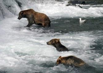 Группа медведей-подводников.