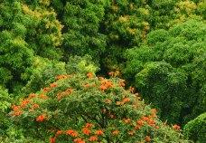 Тропические джунгли.