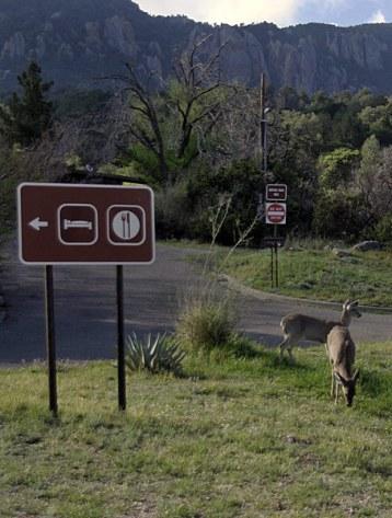 Обедающие на лужайке олени.