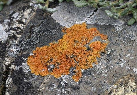 Разноцветный лишайник на камнях.