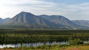 Отражения ёлок в речке Chulitna river. Вдоль дороги George Parks highway.