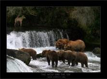 Волк и... кгхм, шестеро медведей.