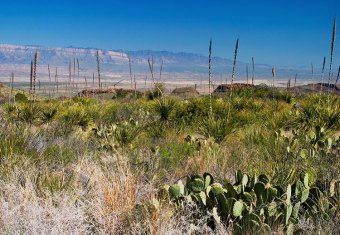 Истоки Можжевелового каньона.