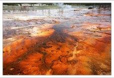 Краски бассейна Biscuit особенно насыщены красными и оранжевыми пигментами.
