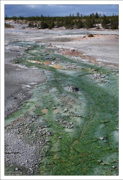 Сложное сообщество зеленых микроорганизмов.