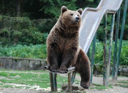 urs-sibiu