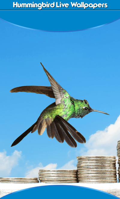 Free Hummingbird Live Wallpapers Android App APK by Latest Application And Games