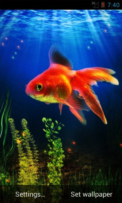 Goldfish Live Wallpaper