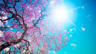46 HD and QHD wallpapers of gorgeous trees (Round 2) - AIVAnet