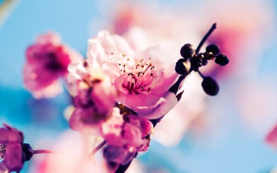 Tired of winter? Get ready for spring with these 48 HD wallpapers