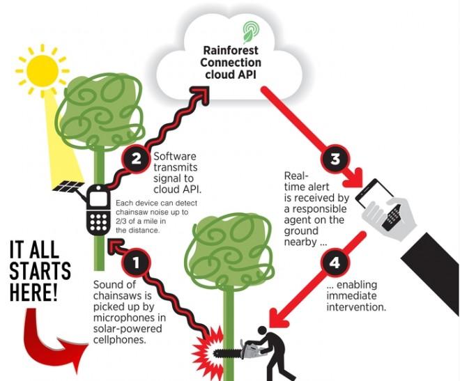 rainforest-connection-kickstarter-how-it-works