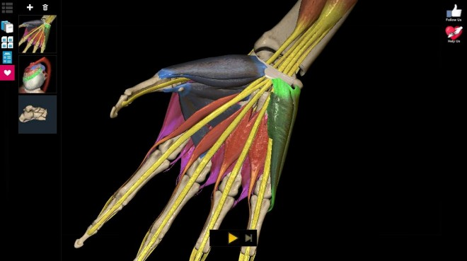 Anatomy Learning - 3D Atlas - Androidmag