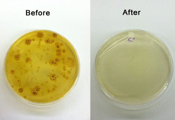 Die Backterienverseuchung von Smartphones, vor und nach der Anwendung mit der Phone Soap Box