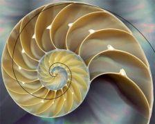 Anel atlante sequencia-fibonacci