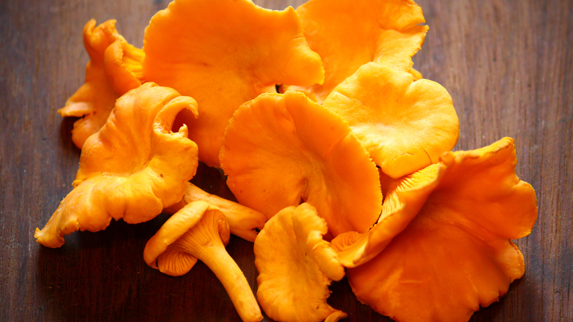 Anima Chanterelles
