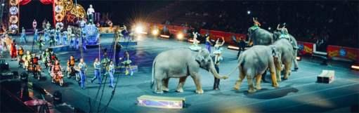 animals-used-entertainment