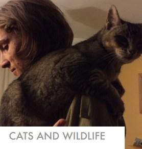 cats-wildlife-report
