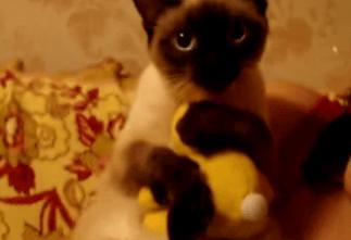 おもちゃ大好きなネコ