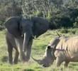 サイ vs アフリカゾウ