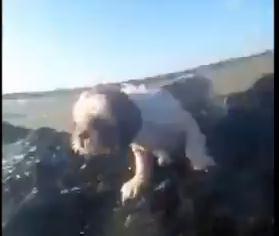 海に囲まれた岩に取り残された犬をカヌーで救助