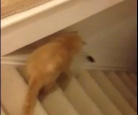 新しい遊びを考えた猫