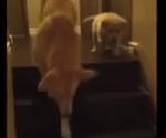 階段の下り方の練習、猫と犬の違い
